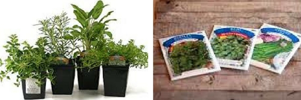 start with potted plants or seeds with an  Herb Garden in an Apartment