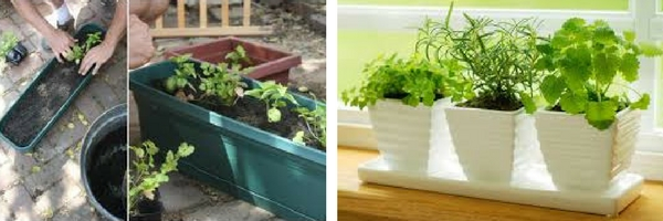 Choose your favorite planter for an Herb Garden in an Apartment